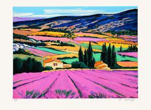 Provence : champs de lavandes by Jean Claude Quilici