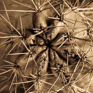 Cactus by Jean-François Dupuis