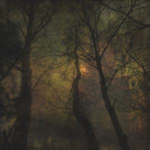 Dark Forest 1 by Jean-François Dupuis