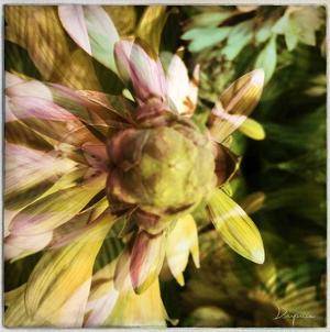 Delicate petals I by Jean-François Dupuis