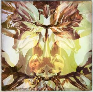 Delicate petals II by Jean-François Dupuis