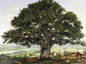 La Plaine D'Annecy-Chene Le Veterant Des Alpes by Jean Jacques Rousseau