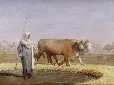 Treading Out Wheat in Egypt