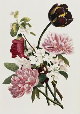 A Bouquet of Tulip and Peonies by Jean Louis Prevost