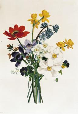 Bouquet of Narcissi and Anemone by Jean Louis Prevost