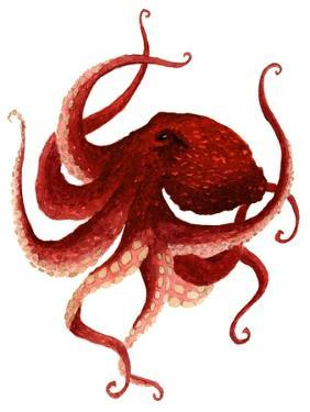 Giant Pacific Octopus - Red by Jeannine Saylor