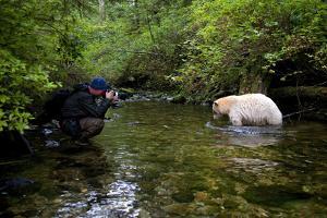 A Photographer Shooting a Kermode or Spirit Bear in a Creek by Jed Weingarten