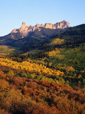 Usa, Colorado, Uncompahgre National Forest, Cimarron Ridge, Panoramic View of a Dense Forest by Jeff Foott