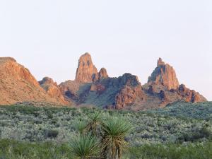 Yucca grows in front of Mule Ears peaks, Big Bend National Park, Texas by Jeff Foott