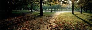 Sunlight Through Eden Park, Cincinnati, OH by Jeff Friedman