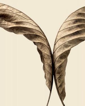 Turning Leaves II by Jeff Friesen