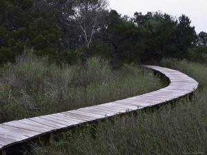 Drummond Point Park Nature Trail, Amelia Island by Jeff Greenberg