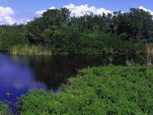 Everglades National Park, FL by Jeff Greenberg