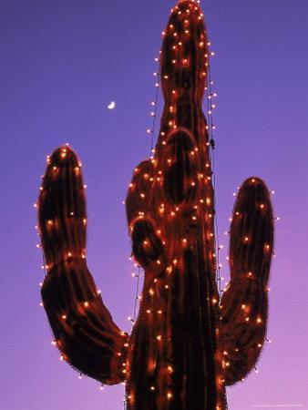 Lighted Wickenburg Cactus, AZ by Jeff Greenberg