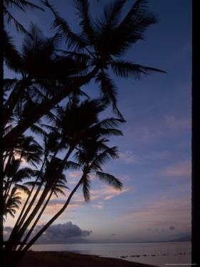 Molokai One Alii Park, Kalohi Channel Beyond Palm by Jeff Greenberg