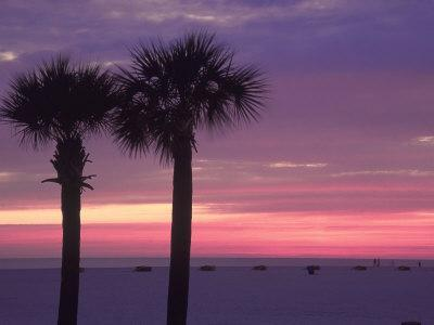 Palm Trees at Dusk, St. Petersburg Beach