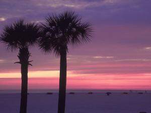 Palm Trees at Dusk, St. Petersburg Beach by Jeff Greenberg