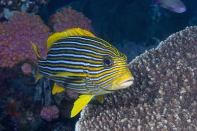 Colorful Tropical Fish by Jeff Hunter