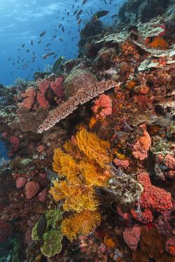 Lush Colorful Tropical Coral Reef by Jeff Hunter