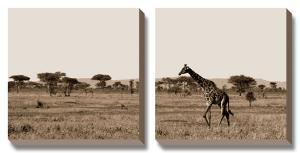 Serengeti Horizons II by Jeff Maihara