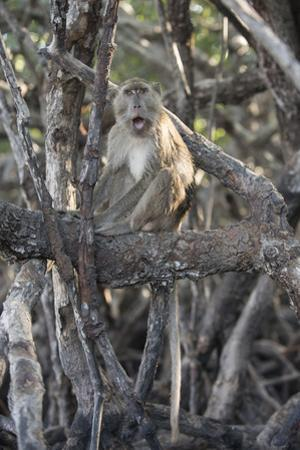 A Long-Tailed Macaque Sitting on a Tree Branch in Komodo National Park by Jeff Mauritzen