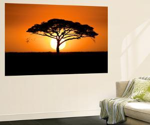 A Silhouetted Acacia Tree, Acacia Species, at Sunset by Jeff Mauritzen