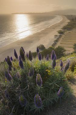 Flowers Along the Pacific Coast Highway in California by Jeff Mauritzen