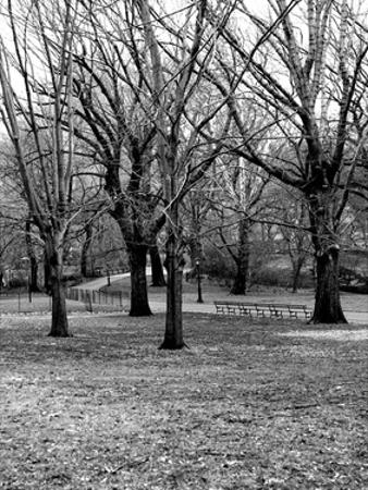 Central Park Image 013 by Jeff Pica
