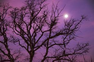Christmas Morning Moon by Jeff R Clow