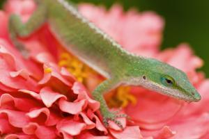Green and Pink in Garden by Jeff R Clow