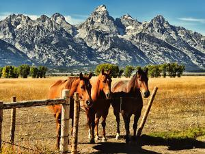 Teton Trio in the Fall by Jeff R Clow