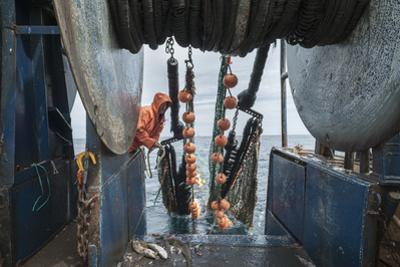Hauling in Dragger Net Filled with Haddock (Melanogrammus Aeglefinus)