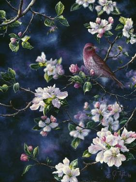 Bird by Jeff Tift