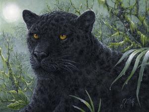 Black Beauty by Jeff Tift