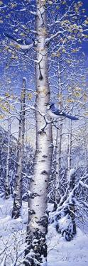 Blue Jay by Jeff Tift