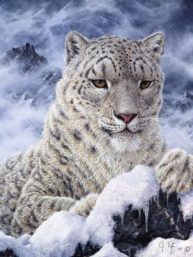Cat by Jeff Tift