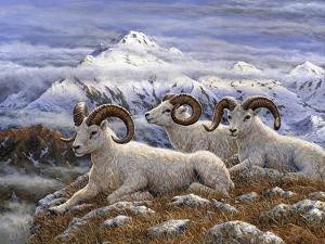 Denali Rams by Jeff Tift