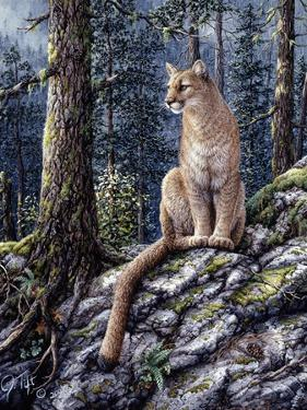 King of the Forest by Jeff Tift