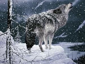 Lone Wolf by Jeff Tift