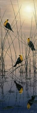 Morning Call - Yellow Headed Blackbirds by Jeff Tift