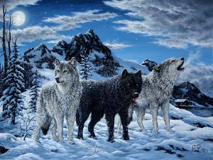 Night Howl by Jeff Tift