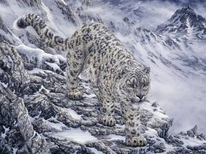 Snow Leopard by Jeff Tift