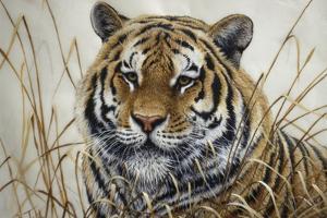 Tiger by Jeff Tift