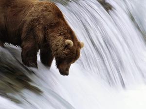 Brown Bear Fishing at Brooks Falls by Jeff Vanuga