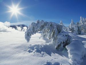 Snow on Trees at Lower Geyser Basin by Jeff Vanuga
