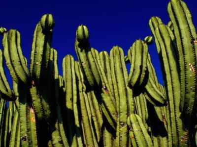 Cactus Againt a Oaxacan Sky in Yagul, Oaxaca, Mexico