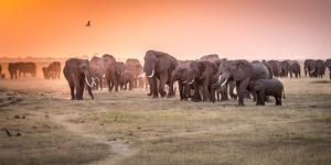Amboseli Morning Stroll to Starbucks by Jeffrey C. Sink