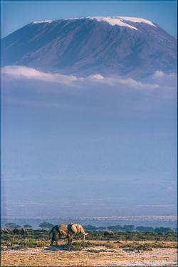 Kilimanjaro and the Quiet Sentinels by Jeffrey C. Sink