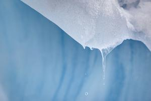 Melting Icicle, Blue Glacial Ice by Jeffrey Conley