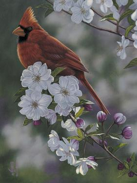 Cardinal Spring Blossoms by Jeffrey Hoff